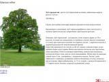 Quercus robur дуб