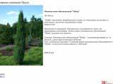 Juniperus communis Meyer можжевельник мейер